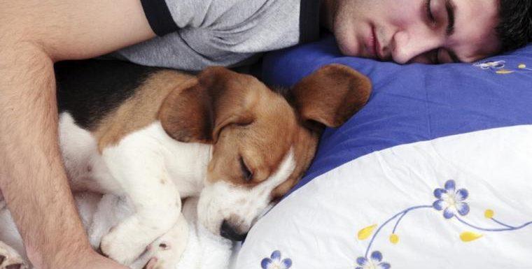 ¿Duermes con tu mascota? Atento que esto es lo que debes saber antes de hacerlo